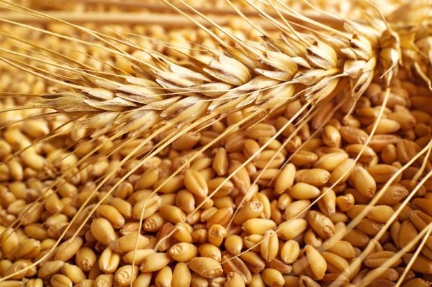 MRiRW zapowiada zwiększoną kontrolę przywozu zbóż