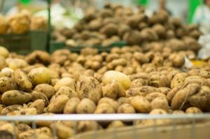 IERiGŻ: Spadły ceny młodych ziemniaków na rynkach hurtowych, wzrosła ich podaż