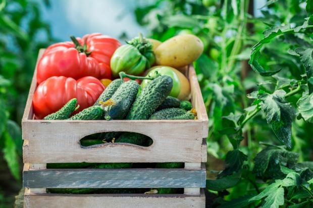 Zapowiadają się rekordowe zbiory owoców i warzyw