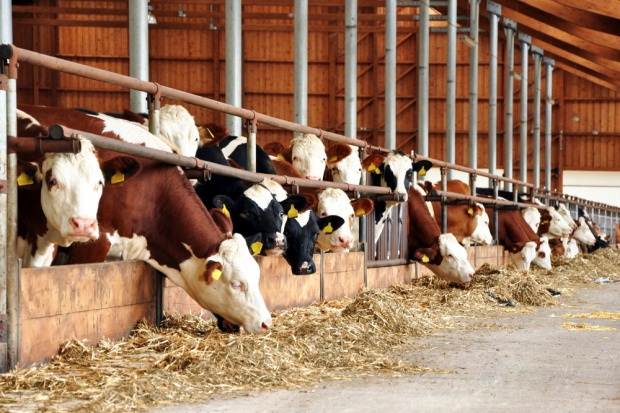 Koniec roku przyniesie wzrost cen detalicznych wołowiny