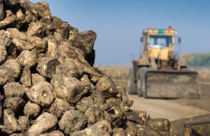 Minister zachęca rolników i cukrowników do zawarcia porozumienia branżowego