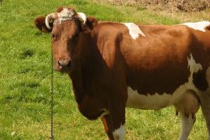Copa Cogeca pozytywnie o pakiecie pomocy na rynku mleka