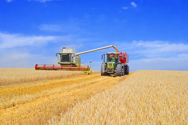 BGŻ BNP Paribas: Wstępne szacunki zbiorów zbóż w 2016 r.