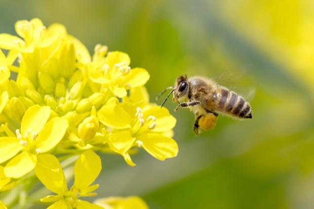 Polskie rolnictwo zawdzięcza pszczołom 4,1 mld złotych