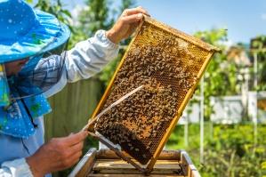 Polaryzacja interesów rolników i pszczelarzy nie służy żadnej ze stron