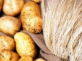 Koniunktura w rolnictwie - raport IERiGŻ