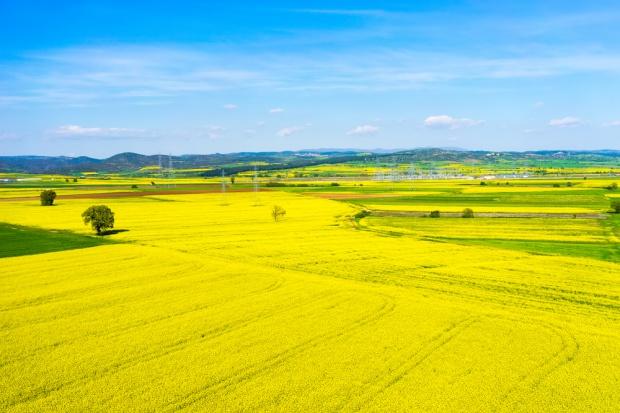 Rozwój upraw rzepaku w Polsce to dowód na pozytywny wpływ biopaliw na rolnictwo