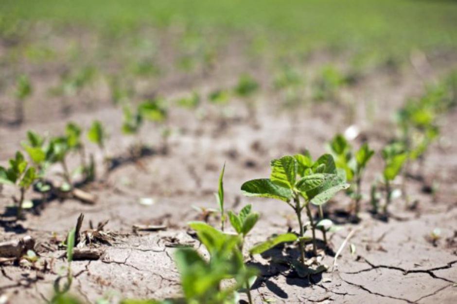 Straty w rolnictwie z powdu klęsk pogodowych oszacowano na 152 mln zł
