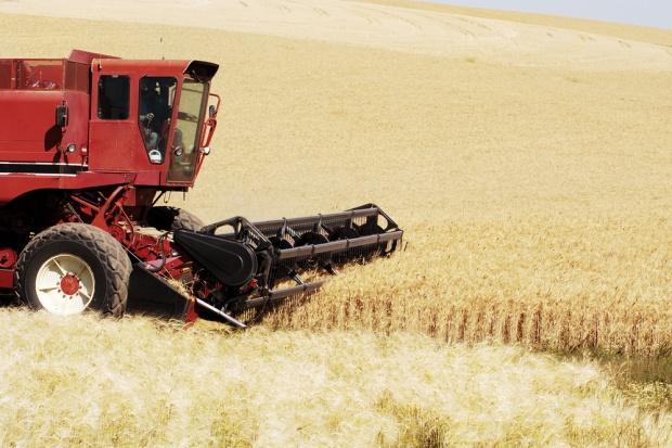 Japonia i Korea Południowa częściowo zablokowały import pszenicy z USA
