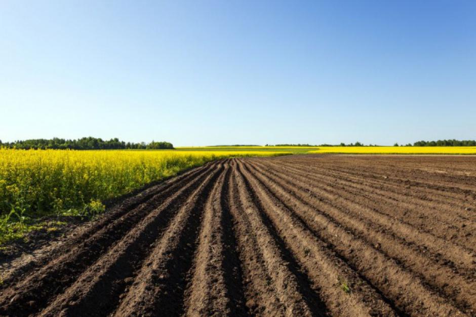 MRiRW: ustawa o ziemi zgodna z konstytucją, przepisy mają zapobiec spekulacjom