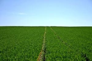 ANR sprzedała w tym roku ok. 17 tys. hektarów ziemi