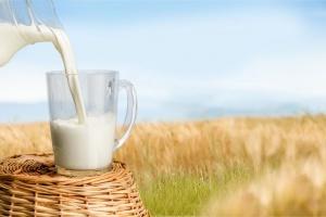 Lactalis: Producenci mleka żądają podwyżek cen skupu