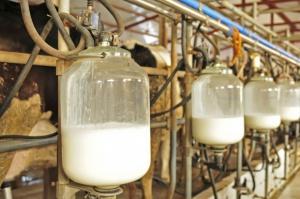 FrieslandCampina podwyższyła gwarantowaną cenę na skupowane mleko