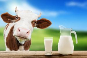 Dostawy mleka w UE mniejsze niż przed rokiem