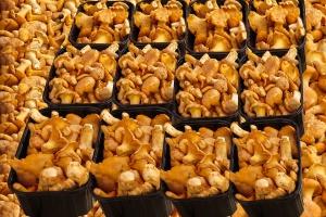 Wielkopolska zagłębiem przetwórstwo grzybów leśnych