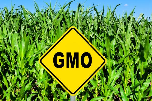 ICPPC wzywa do natychmiastowego wprowadzenia zakazu upraw GMO w Polsce