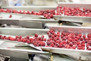 Polska Wschodnia - ważny producent surowca wraz z rozwinięta już bazą przetwórczą