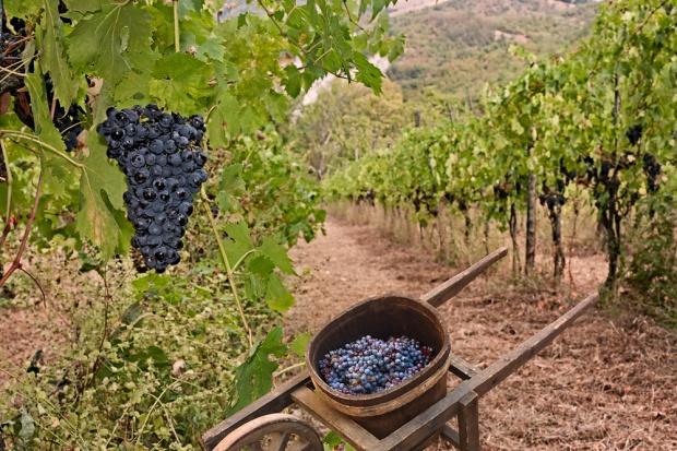 Na portugalskich plantacjach drony pomagają w produkcji wina