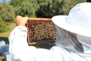 Warmińsko-mazurscy pszczelarze zebrali mniej miodu przez chłodne i deszczowe lato