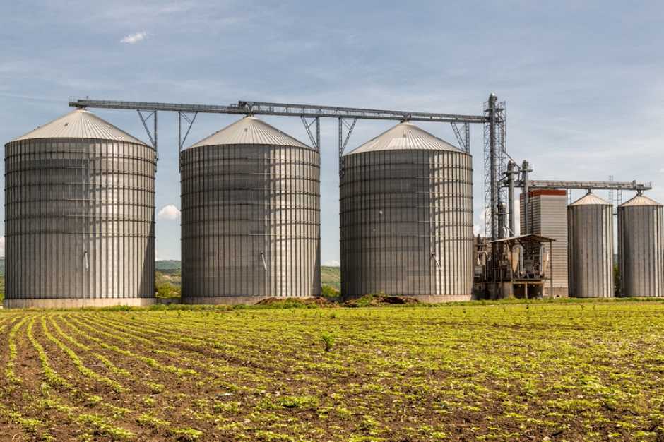 Rekordowe zbiory zbóż w USA. Zabraknie silosów