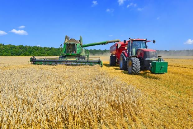 Importerzy zboża z Ukrainy dyktują ceny na krajowym rynku