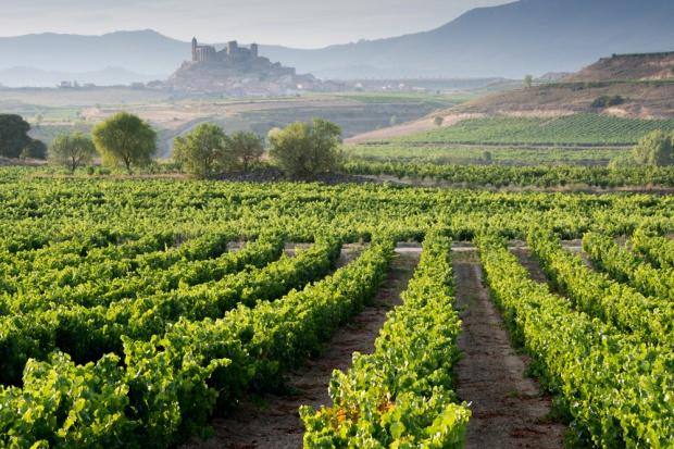 Wrześniowe zbiory winogron ożywiają hiszpańską turystykę