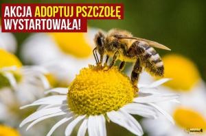 Greenpeace namawia Polaków do adopcji pszczół