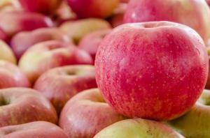 PIORiN kontynuuje lustracje sadów. Polskie jabłka coraz bliżej Chin?
