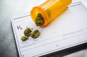 Naukowcy o perspektywach uprawy medycznej marihuany w Polsce