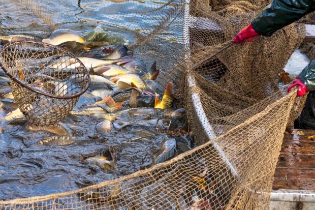 IERiGŻ: rosną połowy ryb na Bałtyku