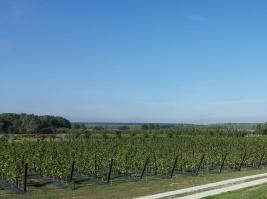 W Polsce trwa moda na zakładanie winnic