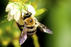 Leśnicy uczą, jak oporządzać dzikie pszczoły na zimę