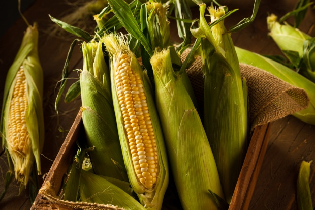 Tegoroczne zbiory kukurydzy na poziomie 3,5 mln ton