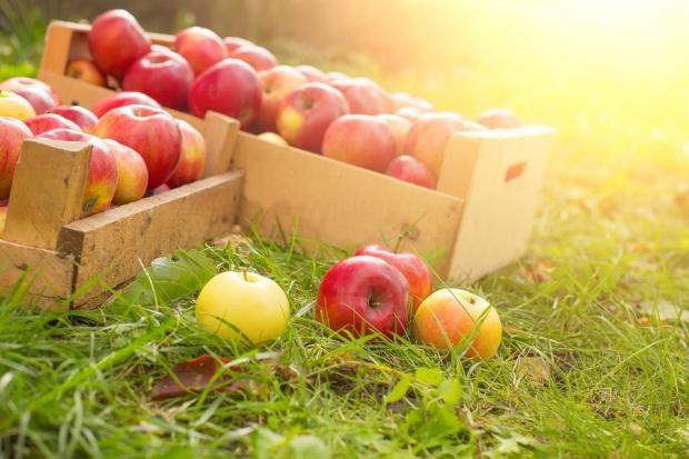 Import żywności rośnie szybciej niż eksport