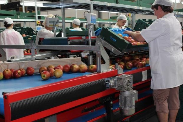 MRiRW: Integracja polskich producentów rolnych w jest niezbędna