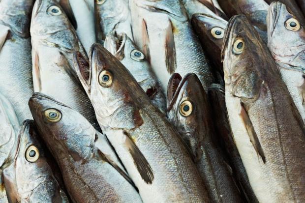 W 2017 r. kwoty połowowe dorszy zostaną zredukowane