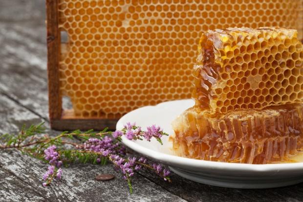 Lubelszyzna polskim zagłębiem pszczelarskim