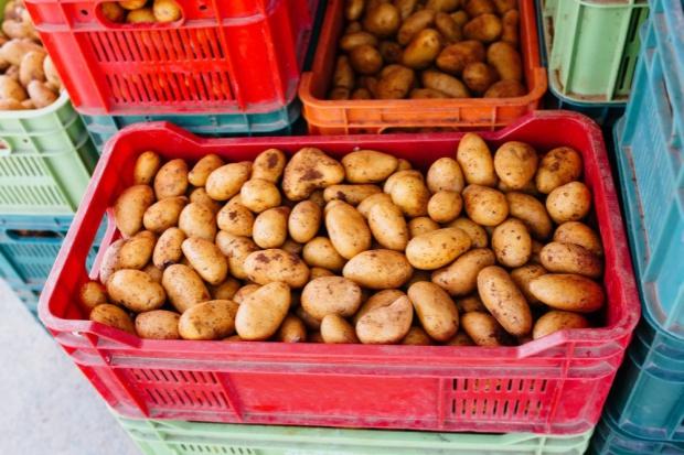 Europa Zachodnia: Czarny PR polskich ziemniaków