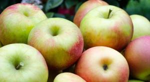 Rosną ceny jabłek w skupach