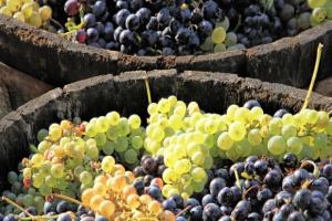 Światowa produkcja wina w 2016 r. będzie niższa o 5 proc. niż przed rokiem