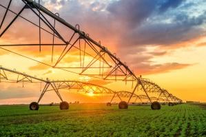"""Raport WWF: potrzeba """"bardziej racjonalnej konsumpcji"""" i zrównoważonej produkcji żywności"""