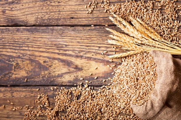 ASF powodem wstrzymania importu zbóż z Ukrainy?