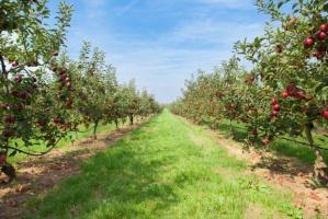 Ponad 200 nowych odmian roślin wyhodowanych w skierniewickim Instytucie Ogrodnictwa