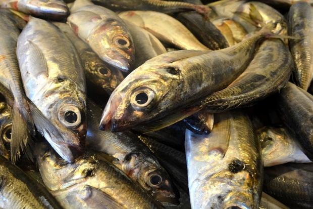 IERiGŻ: Połowy ryb z Bałtyku mogą rosnąć w tym roku ponad 7 proc.