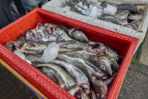 Branża rybna jest skazana na ekspansję zagraniczną