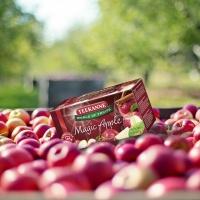 Teekanne: Sprzedaż herbat zielonych, ziołowych, owocowych i funkcjonalnych będzie rosnąć