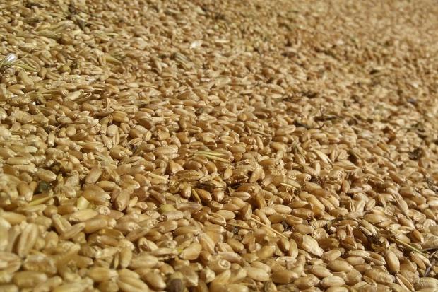 Duży eksport zbóż za pośrednictwem portów
