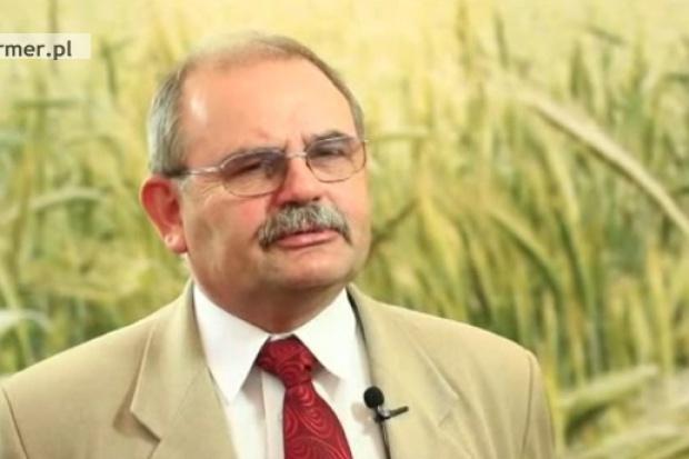 Wciąż zbyt mało polskiej kukurydzy trafia na cele spożywcze