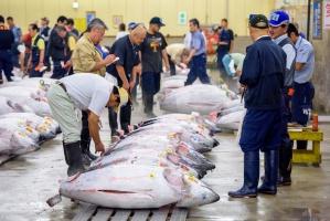 Japonia: Przeprowadzka słynnego targu rybnego przesuwa się co najmniej o rok