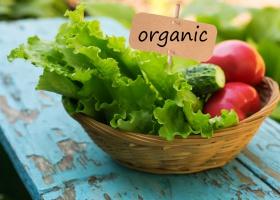 Rośnie sprzedaż produktów ekologicznych w Europie